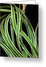 Plant Abstract Greeting Card