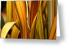 Plant In Yellow And Green Greeting Card