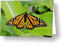 Plant Milkweed And Save The Monarch Butterfly Greeting Card