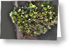Plant Mutation Greeting Card