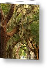 Plantation Oak Trees Greeting Card