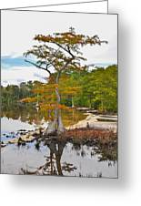 Planted By The Water Greeting Card