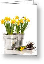 Planting Bulbs Greeting Card by Amanda Elwell