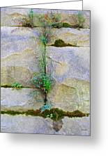 Plants In The Brick Wall Greeting Card