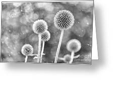 Plants In The Rain Greeting Card by Natalie Kinnear