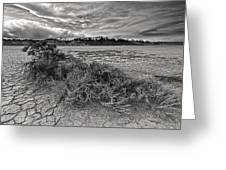 Plants On The Alvord Desert Greeting Card