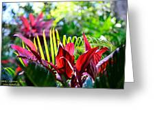 Plants Greeting Card