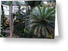 Plants - Us Botanic Garden - 011311 Greeting Card