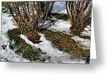 Plantsgrasscomp 2009 Greeting Card