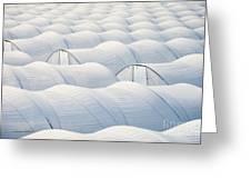 Plastic Sheet Greenhouses To Grow Veggies Greeting Card