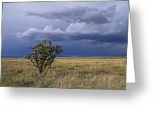 Plateau Cholla New Mexico Greeting Card