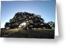 Plateau Oak Tree Greeting Card