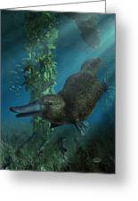 Platypus Greeting Card