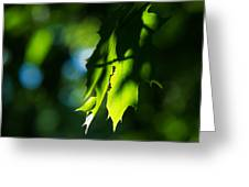 Play Of Light On Maple Leaves Greeting Card