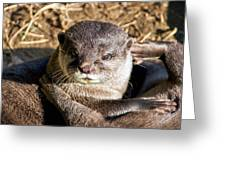 Play Time For Otters Greeting Card