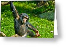Playful Chimp Greeting Card