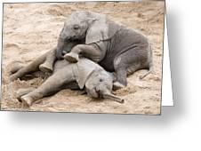Playful Elephant Calves Greeting Card