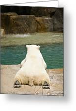 Playful Polar Bear Greeting Card by Adam Romanowicz