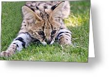Playful Serval Greeting Card