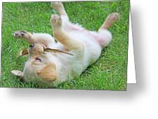 Playful Yellow Labrador Retriever Puppy Greeting Card by Jennie Marie Schell