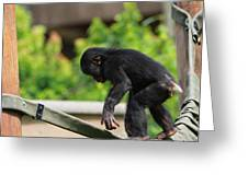 Playful Young Monkey Greeting Card