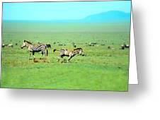 Playfull Zebras Greeting Card