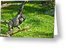 Playing Chimp Greeting Card