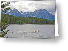 Playing In Colter Bay In Grand Teton National Park-wyoming Greeting Card