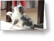 Playing Kitten Greeting Card
