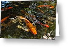 Playing Koi With Me Greeting Card
