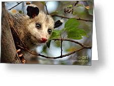 Playing Possum Greeting Card