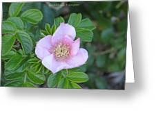 Pleasing Pink Greeting Card