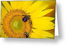 Plenty To Share Greeting Card