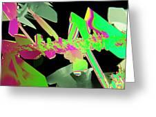 Plm Of Crystals Of Saccharin Greeting Card