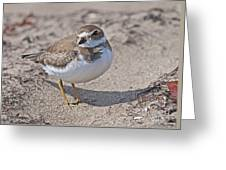 Plover Lover.. Greeting Card