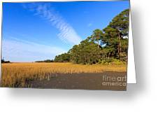 Pluff Mud And Salt Marsh At Hunting Island State Park Greeting Card