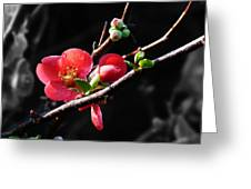 Plum Blossom 3 Greeting Card