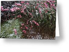 Plum Blossom In The Snow Greeting Card