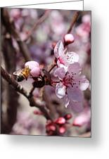 Plum Blossoms 12 Greeting Card