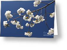 Plum Blossoms 2 Greeting Card
