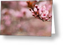 Plum Flower On Branch - Spring Concept Greeting Card