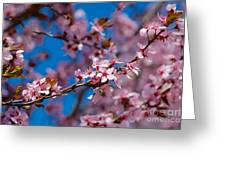 Plum Flowers And Honey Bee Greeting Card