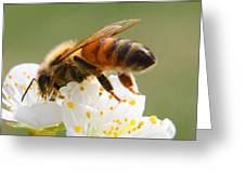 Plum Full Of Bees Greeting Card