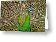 Plumage Greeting Card