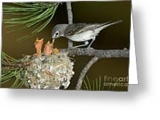 Plumbeous Vireo Feeding Chicks In Nest Greeting Card