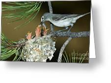 Plumbeous Vireo Feeding Worm To Chicks Greeting Card