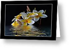 Plumeria Alba Greeting Card