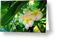 Plumeria Beauty Greeting Card