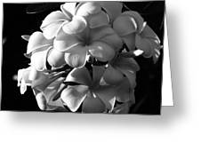 Plumeria Black White Greeting Card