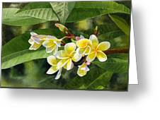 Plumeria Blossoms Greeting Card by Sharon Freeman